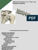 2. Articulatia glenohumerala