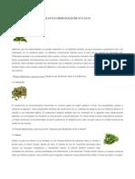 Plantas Medicinales de Yucatan