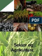 sektorngagrikultura-