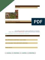 [ 1 ] Plantele Si Fazele Lunii - 7. Sumar 2011-2012 - 6. Butasirea