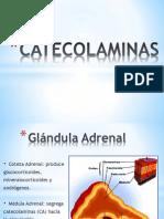 1) CATECOLAMINAS
