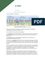 2. Sistema nervioso autónomo II