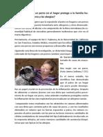 La Presencia de Un Perro en El Hogar Protege a La Familia Humana Contra El Asma y Las Alergias
