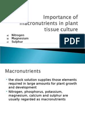 Macronutrients In Plant Tissue Culture N Mg S Pdf Sulfur Nutrients