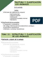 13_estructura y Clasificacion Animal_MM