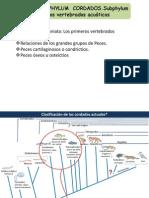 24_Craneados- Peces