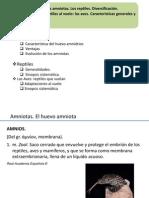 26_Amniotas. Reptiles y Aves