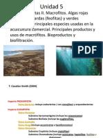 Tema 5 Algas Eucariotas II Algas Verdes