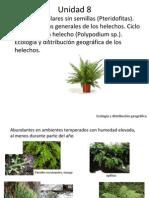 Unidad 8 Pteridofitas