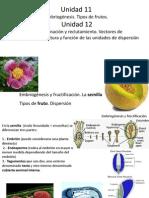 Unidad 12 Angisopermas Fecundación y Fructificación