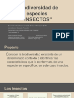 insectos final1