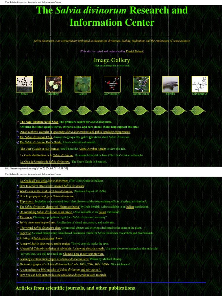 Come Capire Se Vuole Solo Portarti A Letto.The Salvia Divinorum Research And Information Center