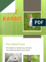 THE RABBIT.pptx