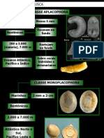 Ecologia e Concha Mollusca