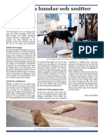 hemlsa hundar och smittor