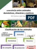 Charlene Lujan-Diferencia Entre Animales Domesticos Silvestres y Exoticos