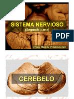 Sistema Nervioso II
