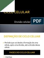 Divisocelular Ad
