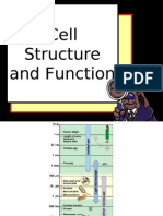 1 Cell Structure