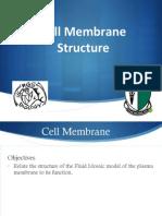 l3 cell membrane