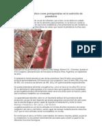 El calcio y fósforo como protagonistas en la nutrición de ponedoras