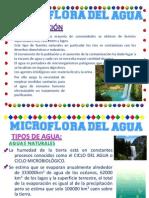 DIAPO MICROFLORA DEL AGUA 01.pptx