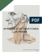 Anatomia Humana Apostila Interativa