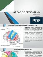 ÁREAS DE BRODMANN