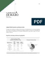 Cultivo Cebolla Cabezona Colombia