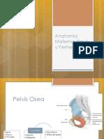 Anatomia Materna Pelvis Perine