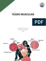 Clase Muscular 2013 VET