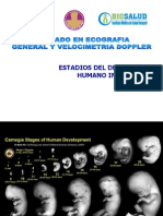 2. Desarrollo Fetal