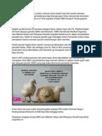 Rekayasa Genetik Dan Bahaya GMO