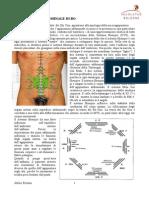 agopuntura_addominalebo (abdominal acupuncture according professor Bo)