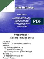 02¡-Organos_Linfoides_NEOCAMPUS_
