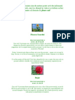 Flori[1]