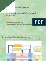 sistnervoso-2