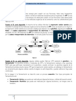Practica Enzimas.doc