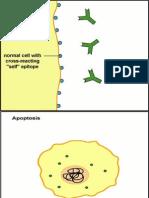 10. Immune Response Part 3 (Reuploaded)