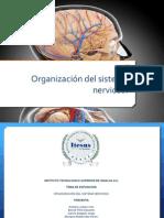 Presentación sistema nervioso