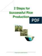12 Steps Required for Successful Rice Production