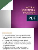 natural selection  evolution