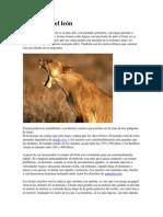 Anatomía del león.docx