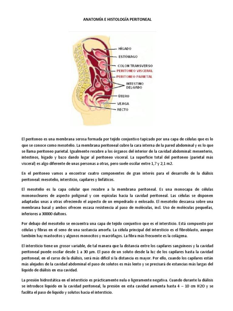 ANATOMÍA E HISTOLOGÍA PERITONEAL