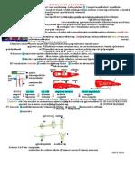 Anatomie-rinologica