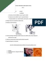 Curs 1 Infectii Generalitati, Supuratii Periosoase