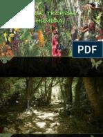 Selva Tropical