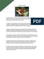 Definición de vegetal