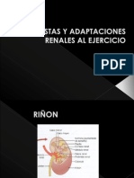 riñon y ejercicio