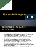 7-FijaciondelNitrogeno